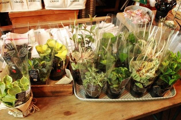 81 植物 古道具 ガーデニング ブリキ ガーデニングフェア