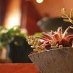 81 椅子セール りんご箱 植物 古物 ブリキ フェア