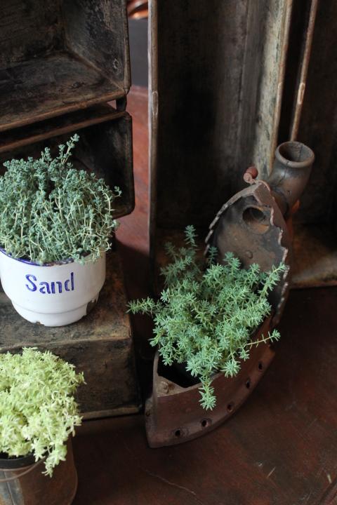 植物と古物