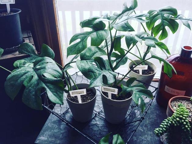 81植物1