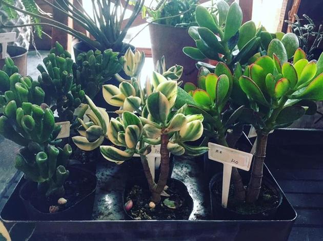 81植物2