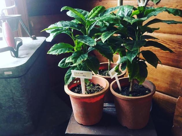 81植物3