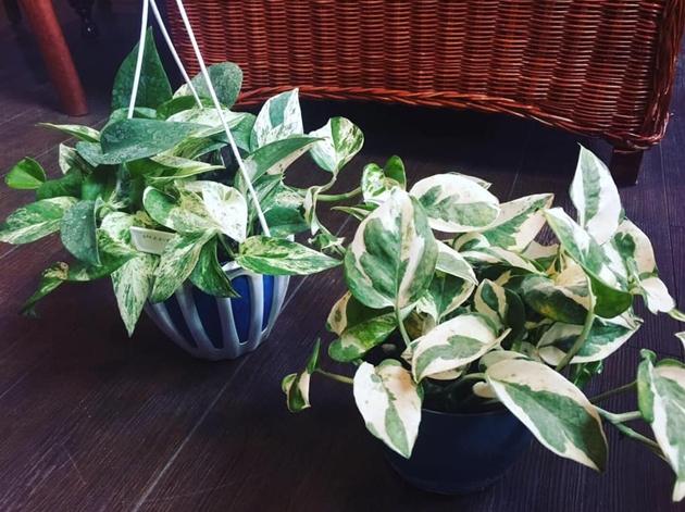 81植物5