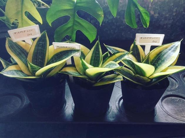 81植物6
