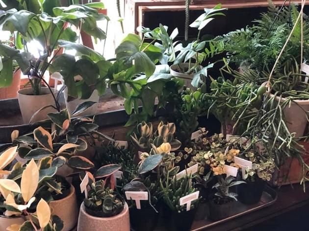 81観葉植物