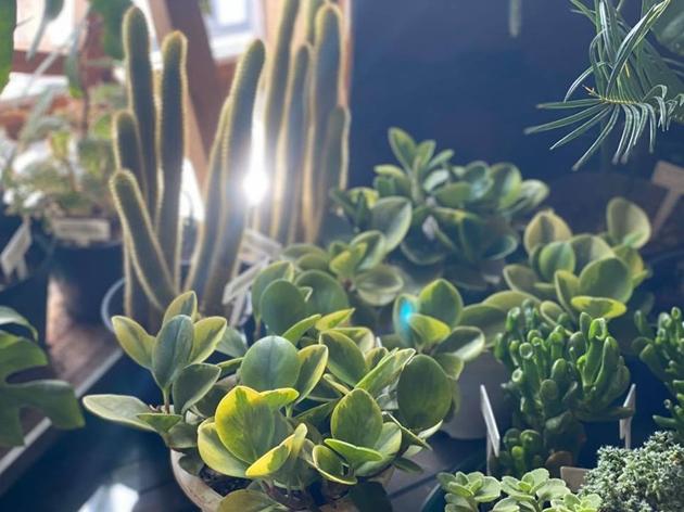 812/7植物