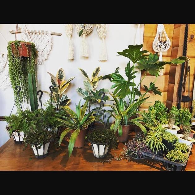 814/3植物