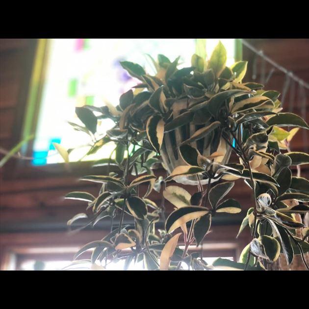 811/16植物・ドライフラワー