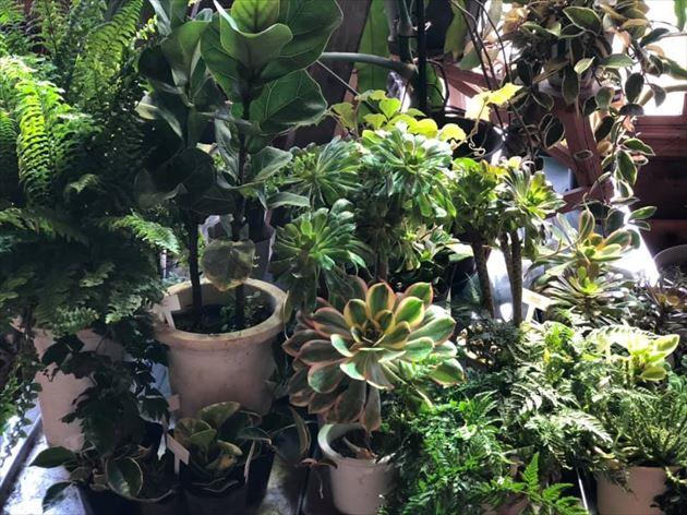 3/23植物