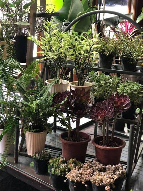 817/29植物